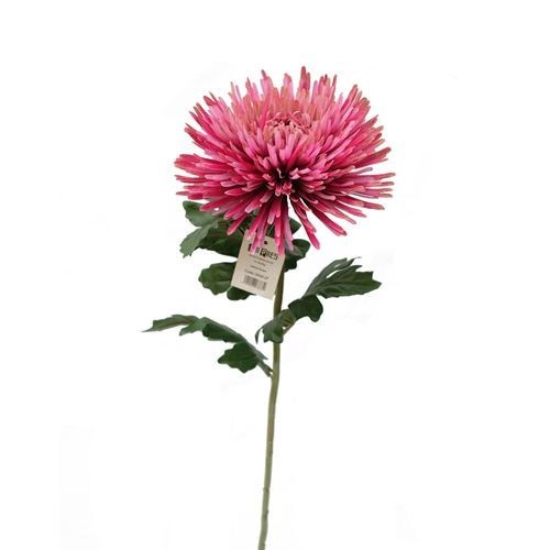 Standard Chrysanthemum Stem
