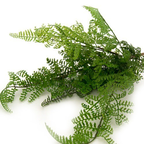 Art. Fern Spray - 40cm Long