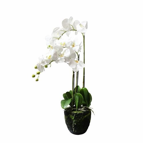 Art. Phalaenopsis Pot Plant - 3 Stem